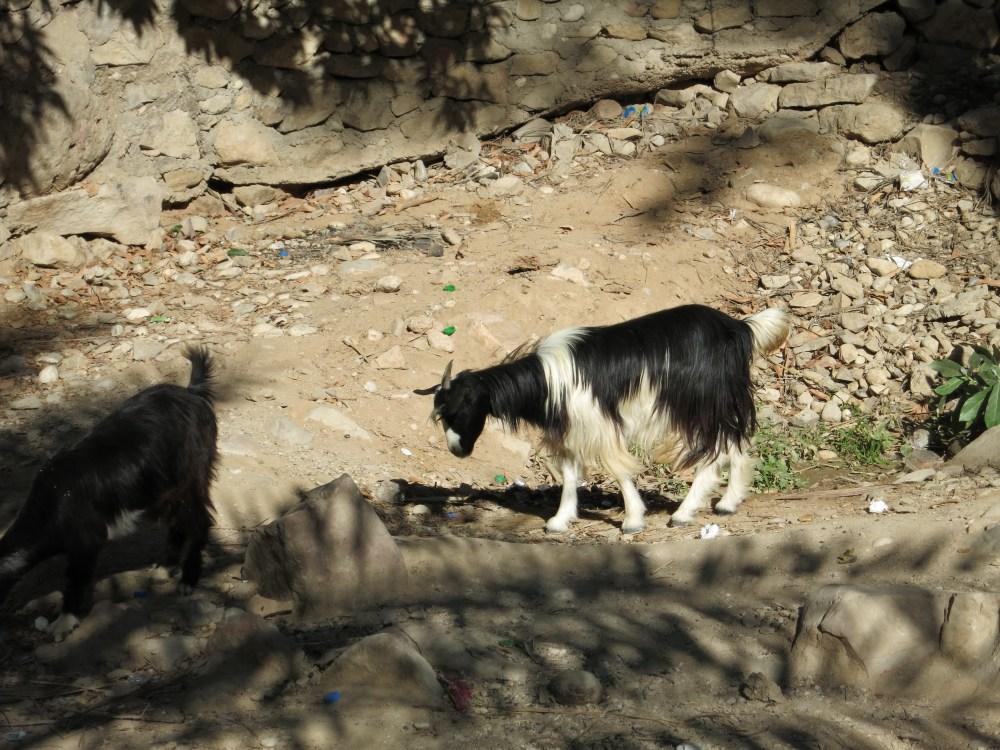 cliff leaping at wadi bani khalid (3/6)