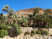 the wall of a plantation alongside the entrance to the wadi