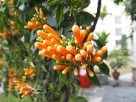 Flowers in Crete, Greece