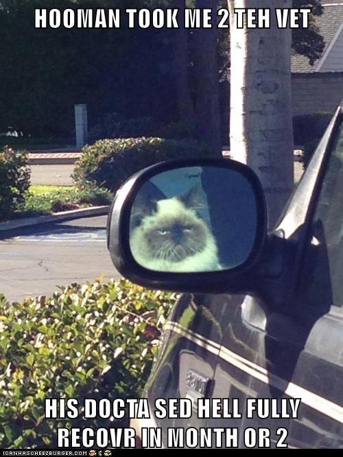 Baaaad Kitty! 2