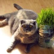 Helpful Kitties 1