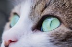 How Do Cats See Color?