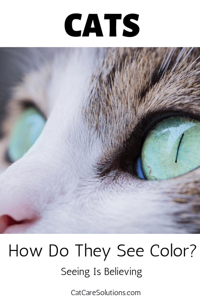 How Do Cats See Color? 2