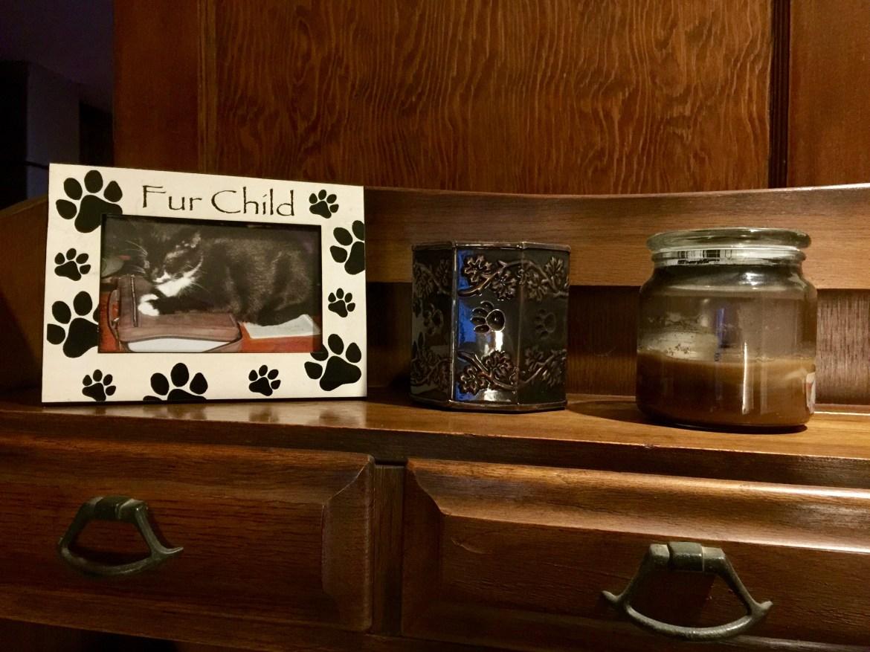 cat cremation