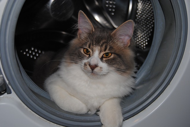 cat in the dryer