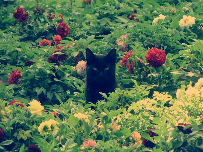 safe houseplants for cats