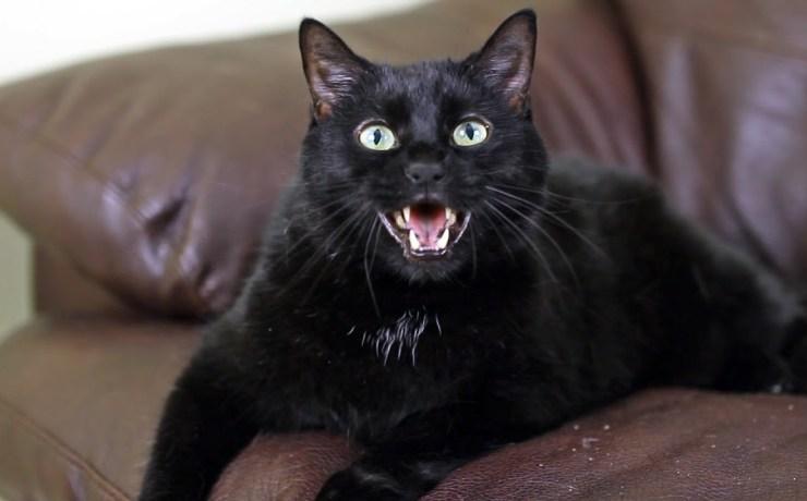 when cats talk