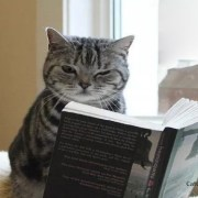 cat reading book
