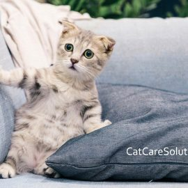 How To Keep Your Cats Calm During Home Improvements 4