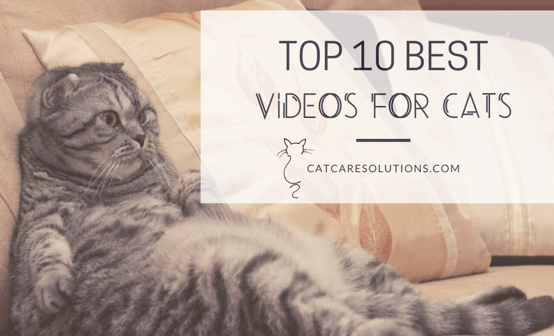 videos cats watch