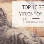videos cats watch