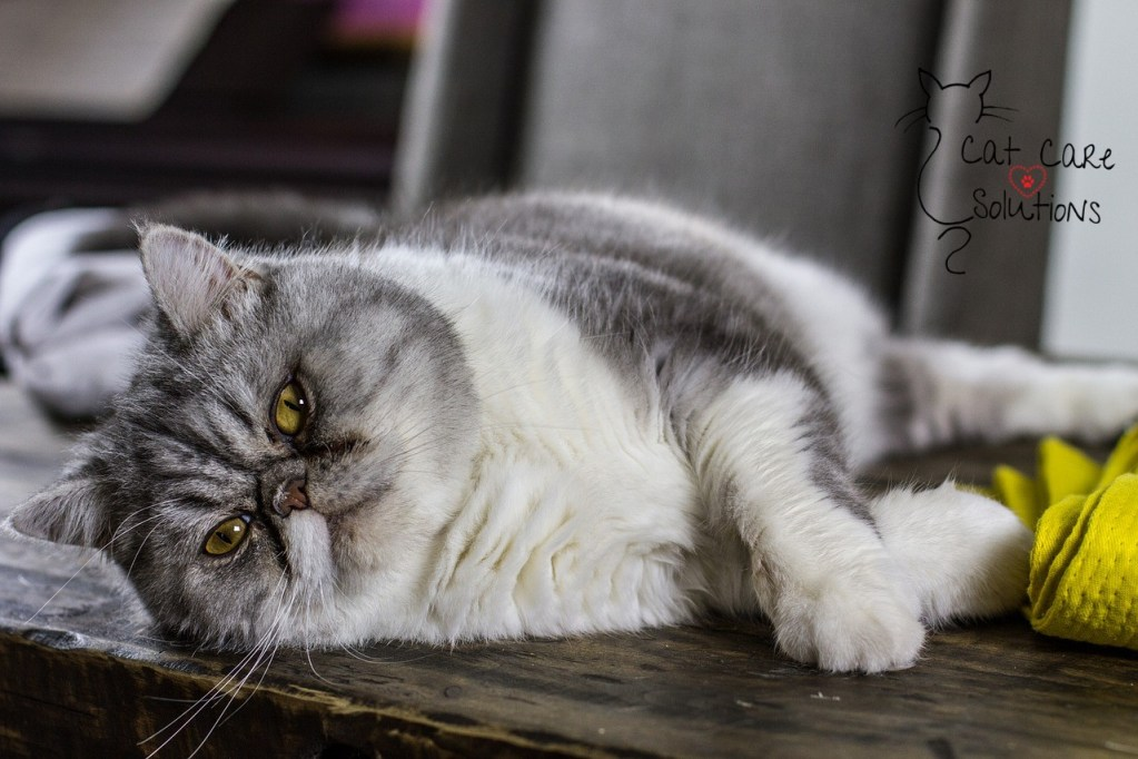 8 signs of diabetes in cats