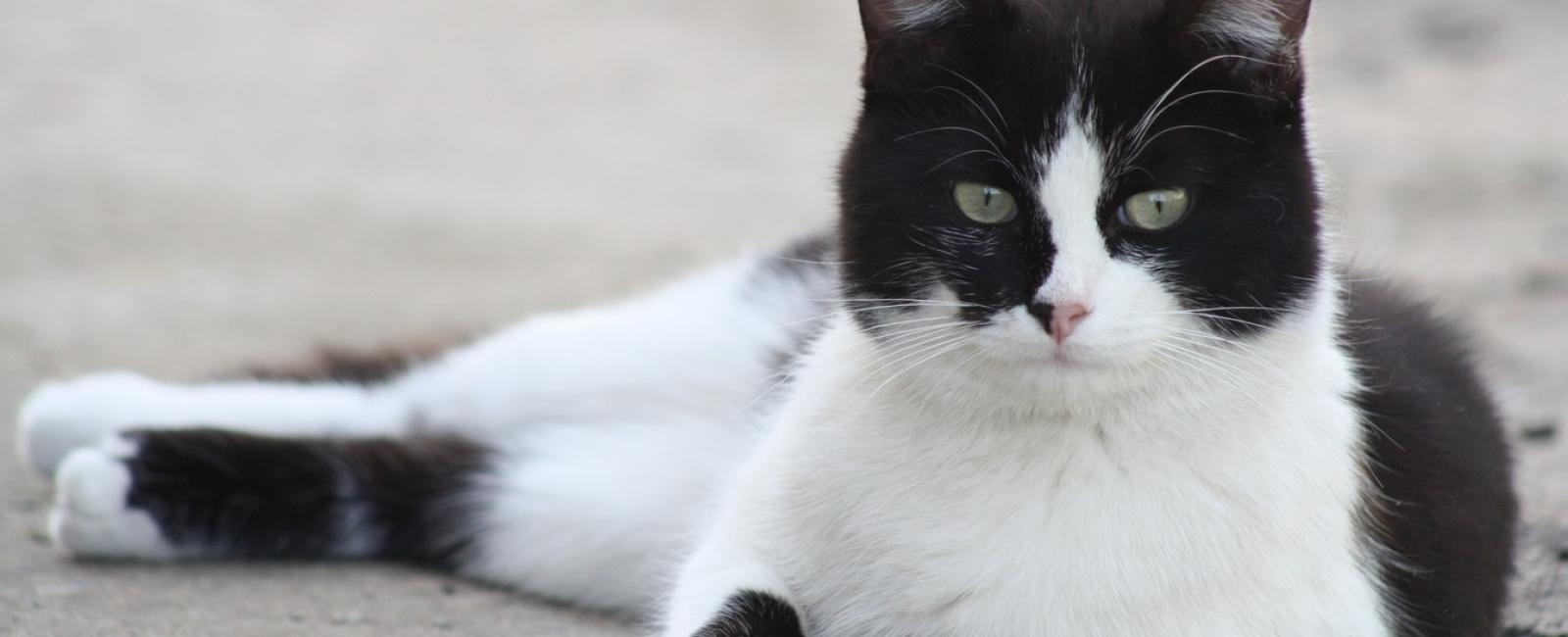 tux kitty