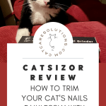 catsizor review: how to trim cat nails painlessly