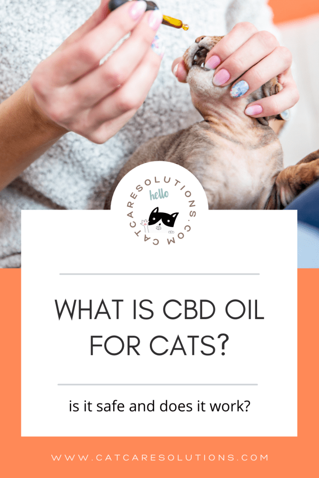 What is cbd oil for cats? Is it safe and does it work?