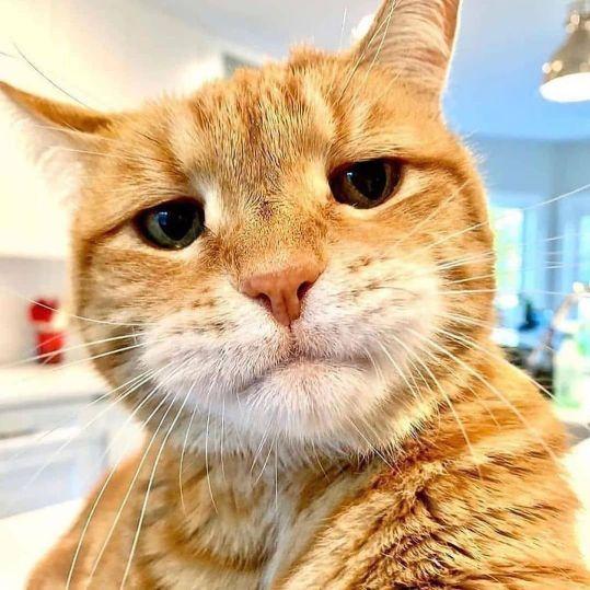 bored cat face