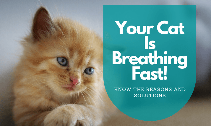 Is-Your-Cat-Breathing-Fast