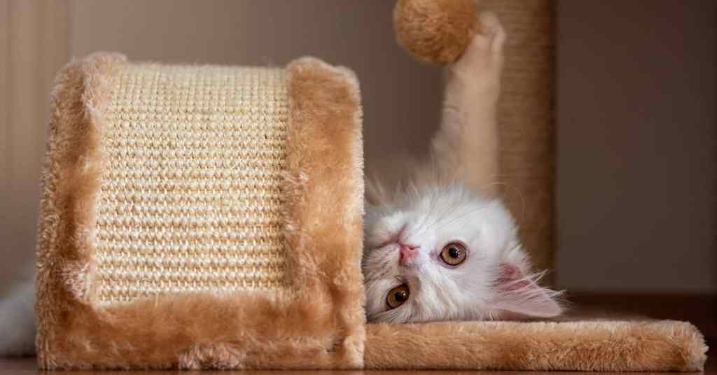 Kitten playful with toys