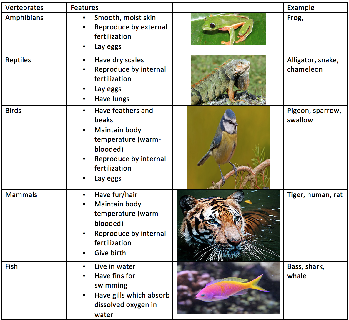 Characteristics And Classification Of Living Organisms