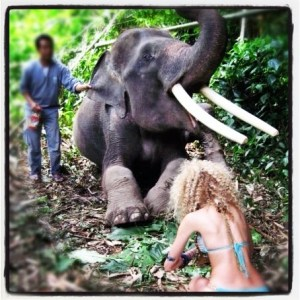 Huh.... Hang with an Elephant.....Check!