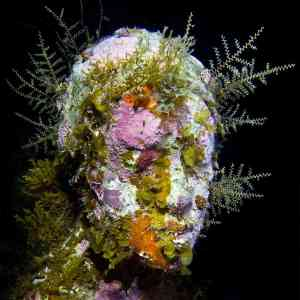Jason deCaires Taylor Coral Encrusted Underwater Sculpture