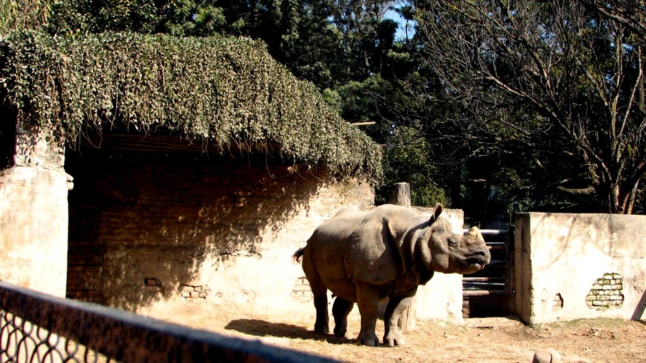 Central Zoo, a Safe Heaven for Rescued Wildlife. Image Source: Trevor's Travel