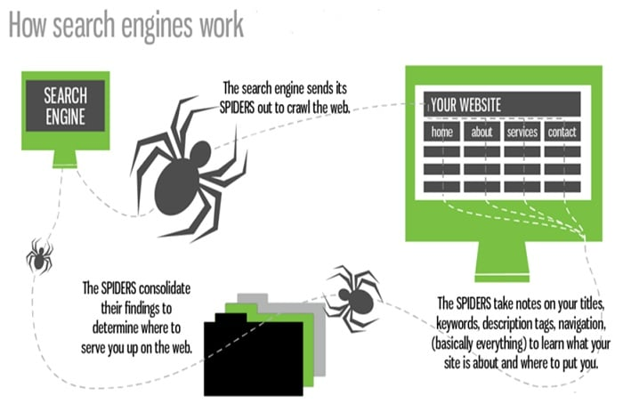 Spiders - Important SEO terms