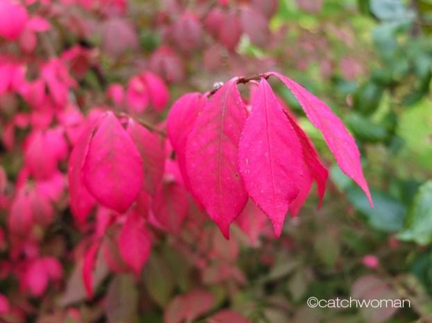 spindelbaum_pink