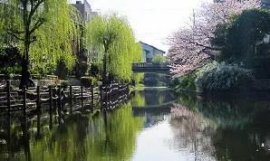 伏見船場界隈の桜情報(写真あり)