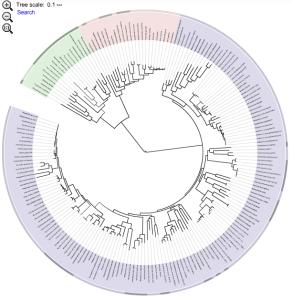 Interactive Tree of Life