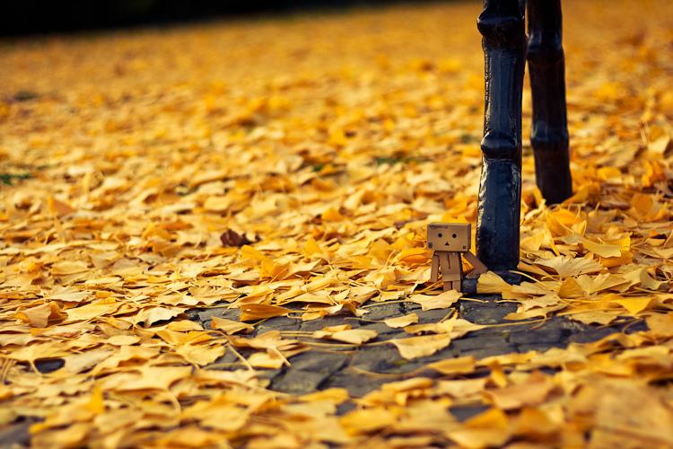 danbo_fall.jpg