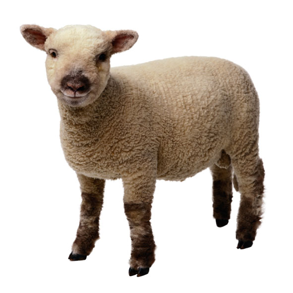 explain that we refer to jesus as the lamb of god not because we