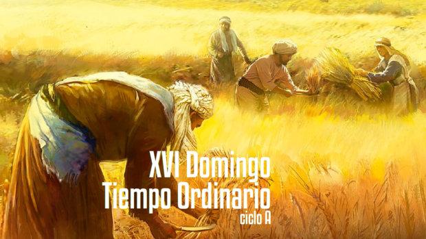 XVI Domingo del Tiempo Ordinario (A)