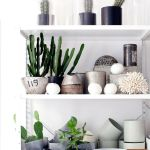 Plants in the Home on Pinterest