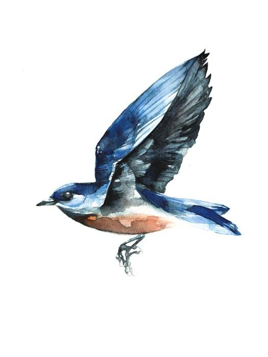Bluebird72