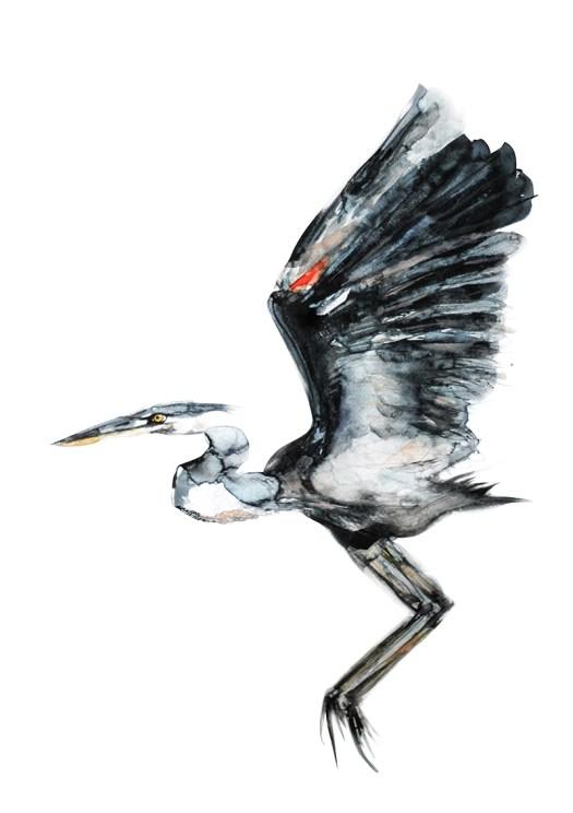 Heron72
