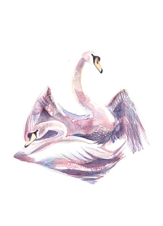 Swans72