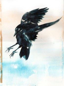 11-29-16_Crow_BG