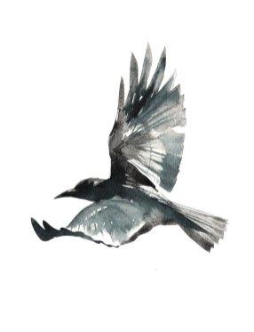 11-29-16_Crow_Soar