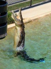 38270_1475157192499_4300379_n australia zoo is the best Australia Zoo is the Best 38270 1475157192499 4300379 n