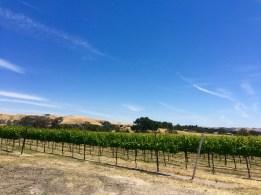 Wild Horse Winery. Templeton, CA, May 2016