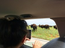 Wichita Mountains Wildlife Refuge, OK