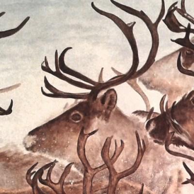 Impression d'art sur papier marouflé sur verre acrylique «Renne»