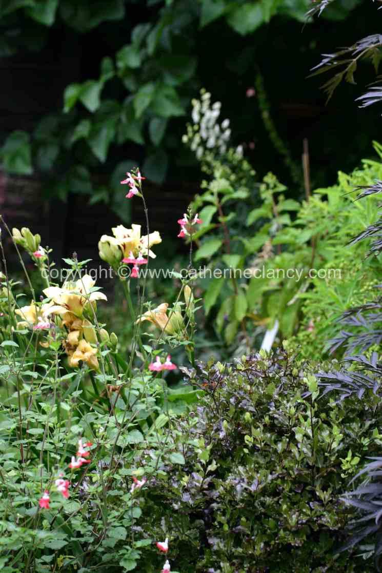 blackheath-walled-garden-6