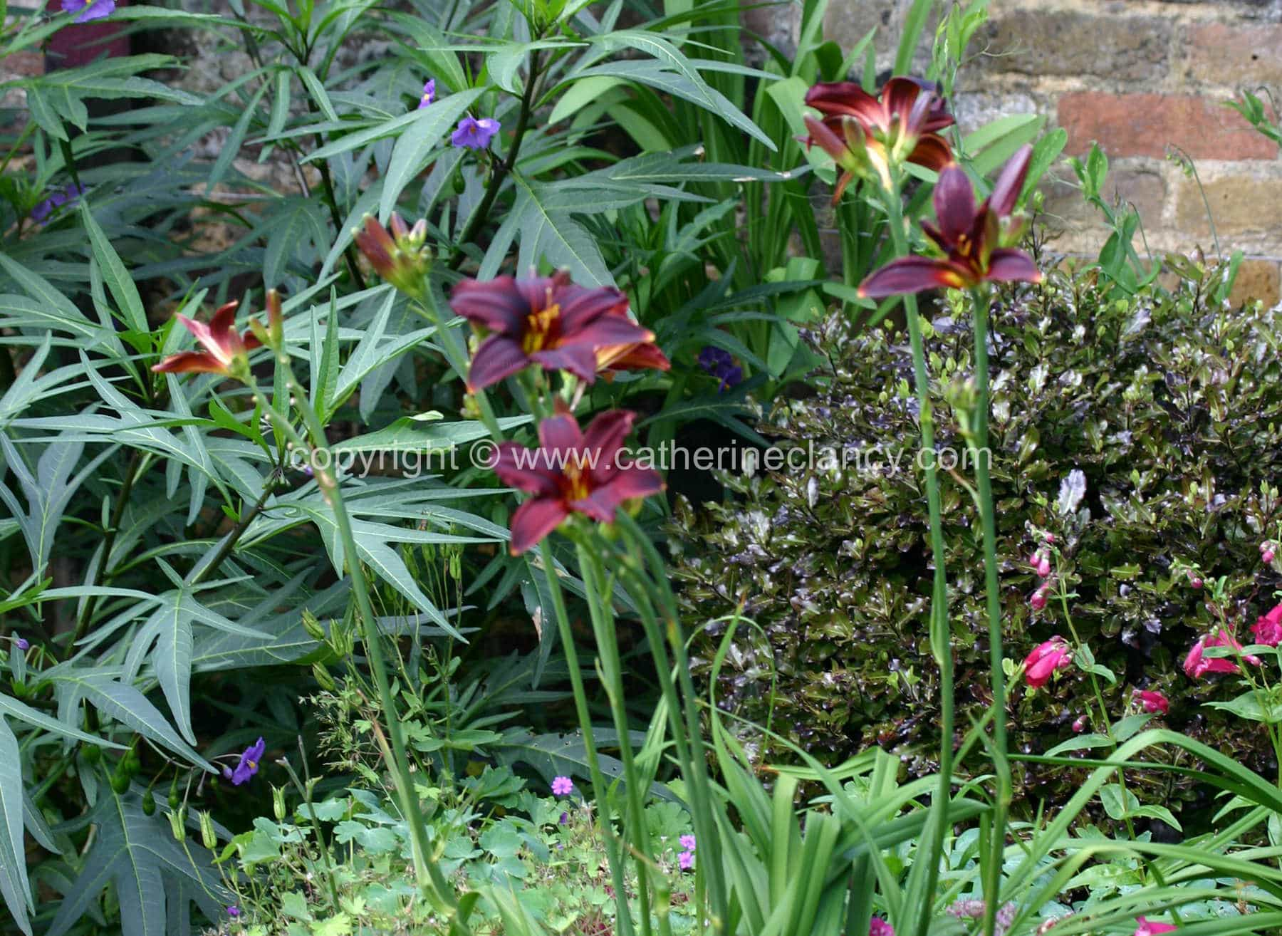 blackheath-walled-garden-flowerbed