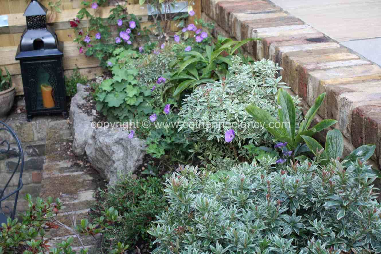 greenwich-terraced-garden-1