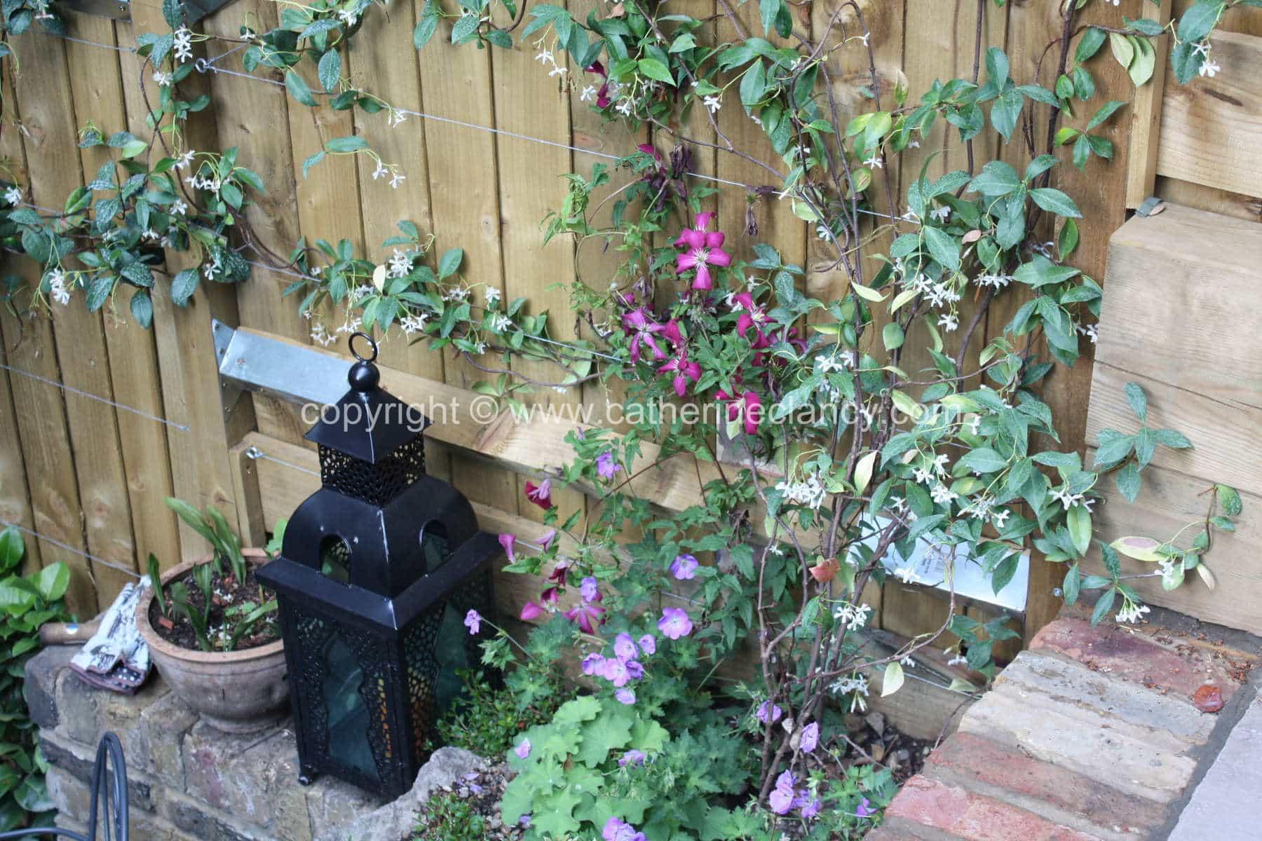 greenwich-terraced-garden-14