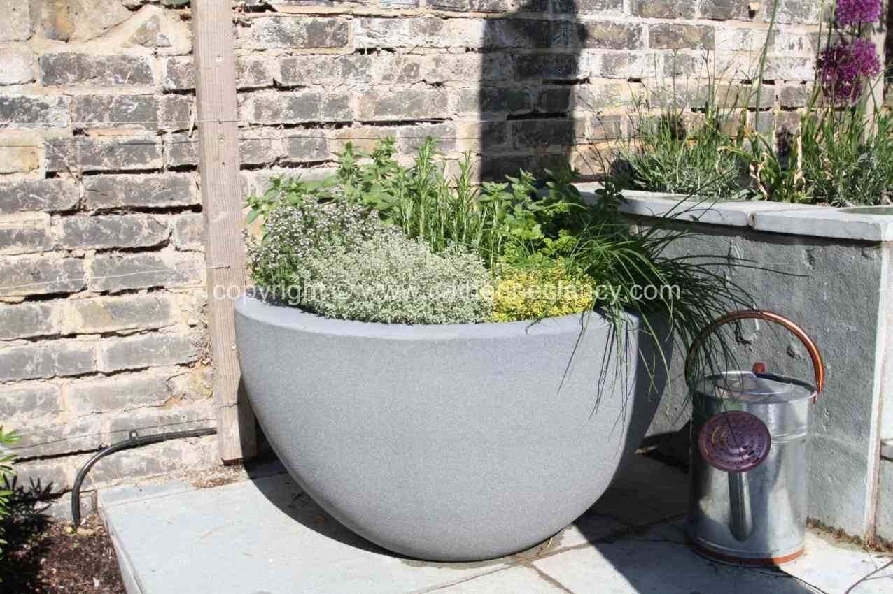 olive-and-lavender-garden-3