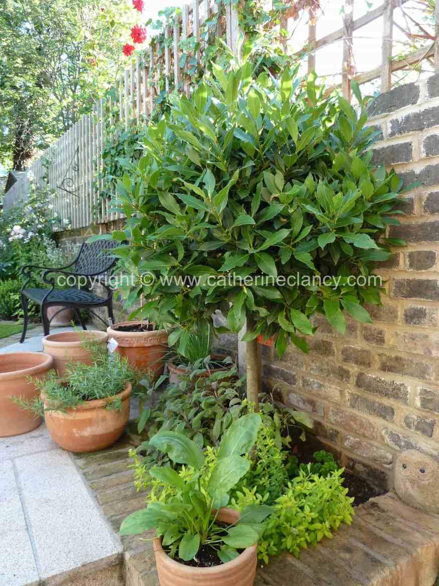 victorian-north-facing-garden-3