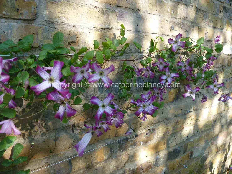 victorian-north-facing-garden-5